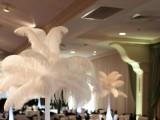 Black & White Gala 2013