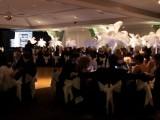 Lake County Haven Black & White Gala